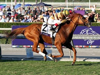 horse of the year wise dan